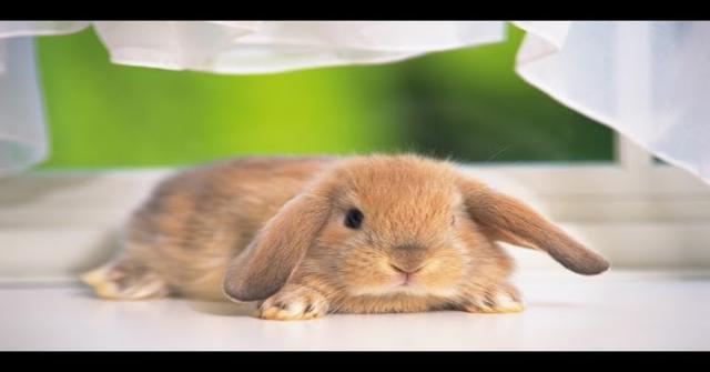 a mi conejo
