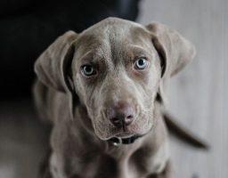 Cómo eliminar las garrapatas en perros