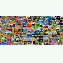etiquetar las fotos y organizarlas