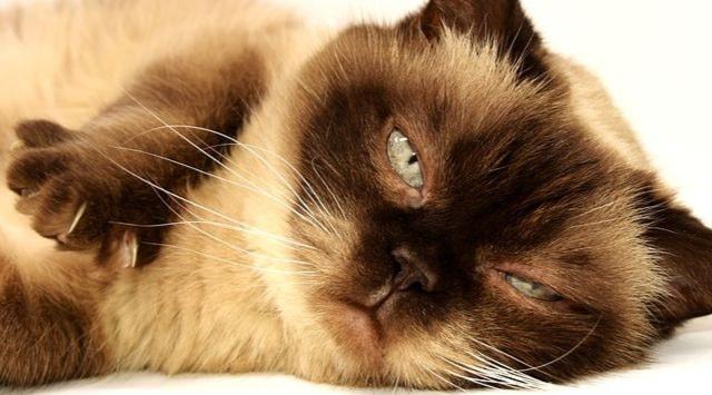 ¿Es malo dormir con el gato?