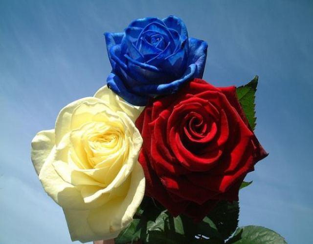 Cuál es el significado de la rosa azul