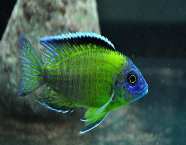 cuidar peces tropicales
