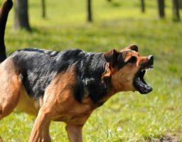 Cómo evitar que el perro ladre