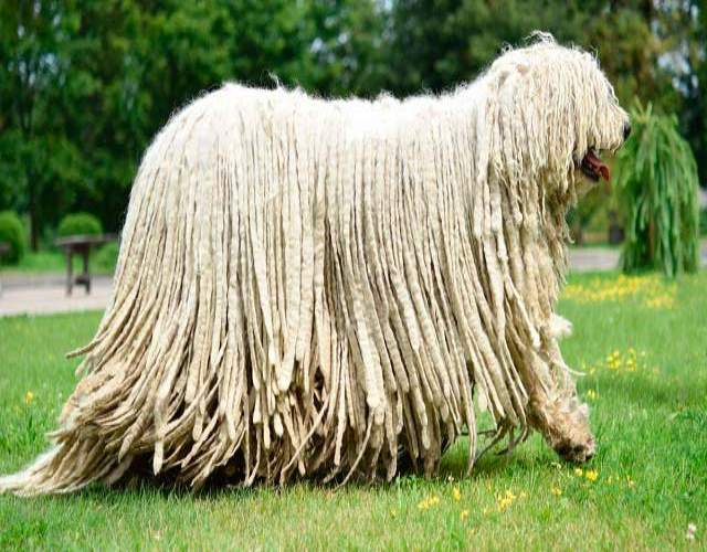 Cuáles son las razas de perro más grandes