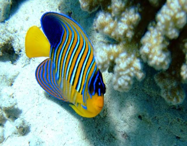 Cómo cuidar peces de agua dulce