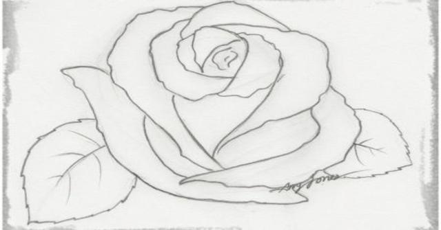 una rosa a carboncillo