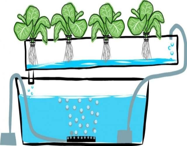 cómo hacer un sistema de hidroponia en casa