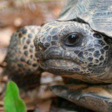 Cómo cuidar las tortugas de tierra