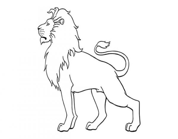 dibujar un león