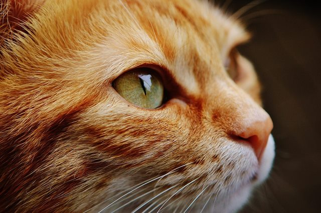 Cuantos años vive un gato