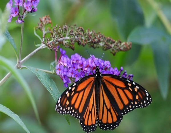 Cómo atrapar mariposas