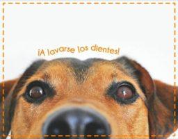 dientes del perro