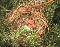 nido para pájaros