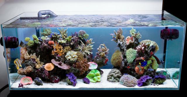 hacer un acuario de agua salada