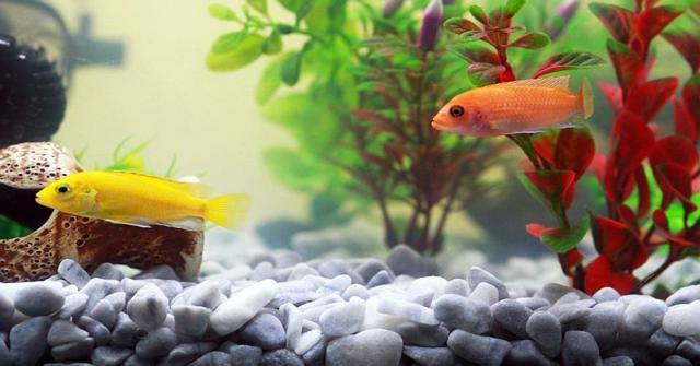 decorar un acuario pequeño