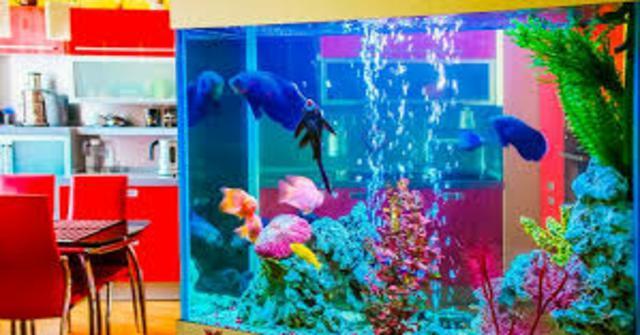 ciclar un acuario