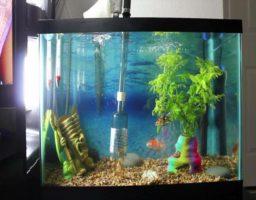 usar un sifón para acuario