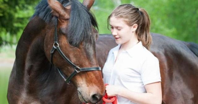 domar a un caballo