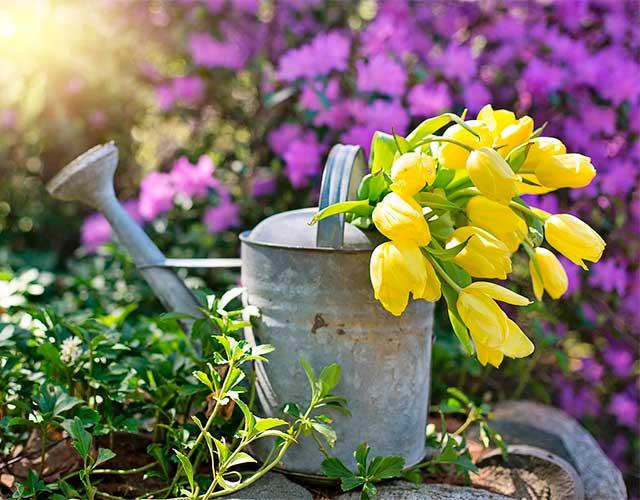 regar las plantas correctamente